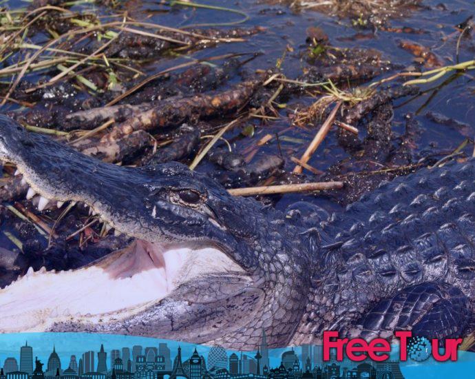 ¿Cuál es la mejor excursión a los Everglades?