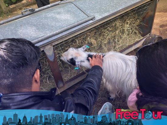 descuentos y vales en el zoo de londres 4 - Cosas gratis que hacer en Praga
