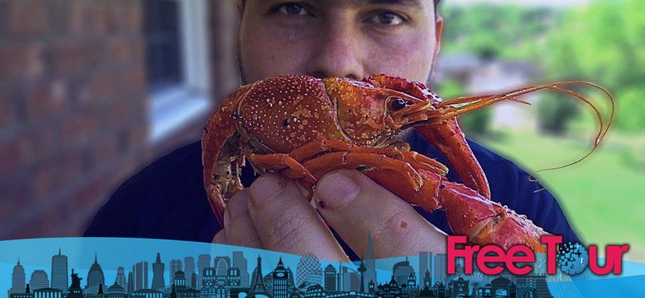 Langosta, cangrejo de río, cangrejo de río, cangrejo de río - Es la temporada en Nueva Orleans
