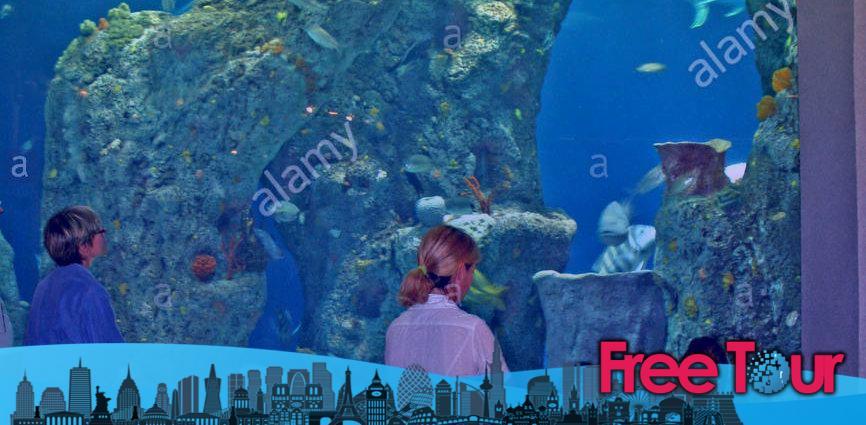 visite el acuario de carolina del sur 866x425 - Visite el Acuario de Carolina del Sur