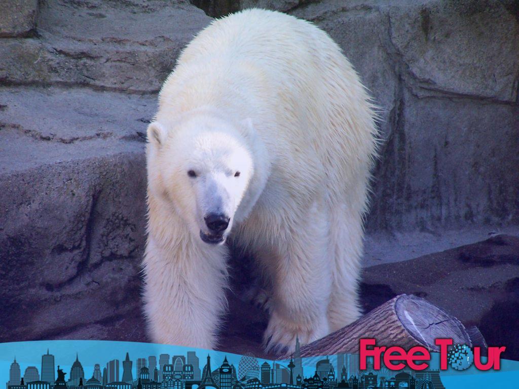 zoologico de lincoln park conservatorio de lincoln park 2 1024x768 - Qué hacer en Chicago con los niños